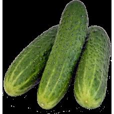 Cucumber ( শসা )