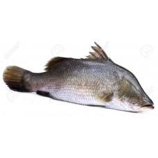 Koral Fish